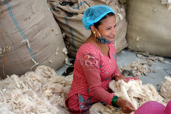 High-Quality Wool From The Himalayas